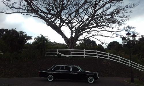 SPOOKY-TREE-IN-COSTA-RICA.-MERCEDES-LIMOUSINE-TOURS.40254662336fb768.jpg