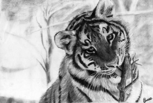 Tiger-01e73d601696ce96e7.jpg